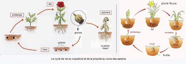 plante annuelle définition